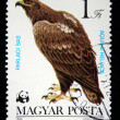 HUNGARY - CIRCA 1983: A stamp printed in HUNGARY shows a White-tailed Eagle (Haliaeetus albicilla), from series bird of prey, circa 1983 — Stock Photo