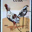 CUBA - CIRCA 1981: A stamp printed in CUBA shows Game-cock Jabao, from series Fighting cocks, circa 1981 - Photo