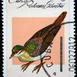 CUBA - CIRCA 1979: A stamp printed in CUBA shows Key West Quail-Dove (Geotrygon chysia), from series Breeds of pigeon, circa 1979 — Stock Photo