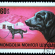 Stock Photo: MONGOLI- CIRC1978: stamp printed in Mongolishows dog Labrador Retriever, one stamp from series, circ1978