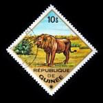 GUINEA - CIRCA 1975: A stamp printed in Guinea shows Leo - Panthera leo, circa 1975 — Stock Photo