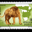 HUNGARY - CIRCA 1981: A stamp printed in Hungary shows Lion - Panthera leo, circa 1981 - Stock Photo