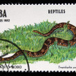 "CUBA - CIRCA 1982: A stamp printed in Cuba shows Leopard dwarf boa - Tropidiphis pardalis, series ""Reptiles"", circa 1982 — Stock Photo"
