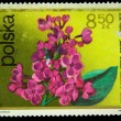 POLAND - CIRCA 1972: A stamp is printed in Poland, lilac Turkish, circa 1972 - 图库照片