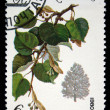 USSR - CIRCA 1980: A stamp printed in the USSR shows tree Small-leaved Lime - Tilia cordata, one stamp from series, circa 1980 - Stock Photo