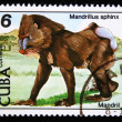 CUBA - CIRCA 1978: A stamp printed by Cuba shows the Mandrill - Mandrillus sphinx, stamp is from the series, circa 1978 - Stock Photo