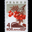 Stock Photo: USSR - CIRC1964: stamp printed in USSR shows mountain ash - Sorbus, series, circ1964