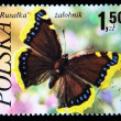 POLAND - CIRCA 1989: A stamp printed in Poland shows butterfly Mourning Cloak Butterfly - Nymphalis antiopa, circa 1989 — Stock Photo