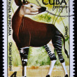 CUBA - CIRCA 1978: A stamp printed by Cuba shows the Okapi- Okapia johnstoni, stamp is from the series, circa 1978 — Stock Photo