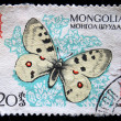 "MONGOLIA - CIRCA 1963: A stamp printed in Mongolia shows butterfly with the inscription ""Parnassius Apollo"" from the series  — Stock Photo"