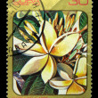 CUBA - CIRCA 1984: A stamp printed in Cuba shows Plumeria alba, circa 1984 — Stock Photo