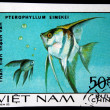 VIETNAM - CIRC1980: stamp printed by Vietnam shows fish Pterophyllum eimelei, stamp is from series, circ1980 — Stock Photo #12169597