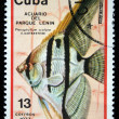 CUB- CIRC1977: stamp printed by Cubshows Pterophyllum scalare fish, stamp is from series, circ1977 — Stock Photo #12169599