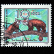 DDR - CIRCA 1980: A stamp printed in DDR (East Germany) shows Red Pandas, circa 1980 — Stock Photo #12169657