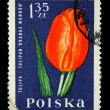 POLAND - CIRCA 1964: A stamp printed in Poland shows red tulip, circa 1964 — Stock Photo