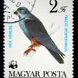 HUNGARY - CIRCA 1983: A Stamp printed in Hungary shows Red-footed Falcon - Falco vespertinus, circa 1983 — Stock Photo