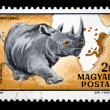 HUNGARY - CIRCA 1981: A Stamp printed in Hungary shows Black Rhinoceros - Diceros bicornis, circa 1981 - Stock Photo