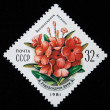 USSR - CIRCA 1981: A stamp printed in the USSR shows Rhododenron kotschyi, circa 1981 - Stock Photo
