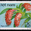 VIETNAM - CIRCA 1980: A stamp printed in Vietnam shows orchid Rhynchostylis gigantea, series, circa 1980 - Stock Photo