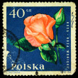 POLAND - CIRCA 1964: A stamp printed in Poland shows red rose, circa 1964 — Stock Photo