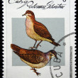 CUBA - CIRCA 1979: A stamp printed by Cuba shows the Bird Ruddy Quail-Dove - Geotrygon montana, stamp is from the series , circa 1979 — Stock Photo