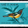 VIETNAM - CIRCA 1981: A stamp printed by Vietnam shows the Bird Ruby-cheeked Sunbird - Anthreptes singalensis, stamp is from the series, circa 1981 - Stock Photo