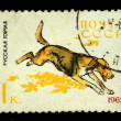 Постер, плакат: USSR CIRCA 1965: A stamp printed in USSR shows Russian Hound series Dogs circa 1965