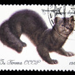 USSR - CIRCA 1980: A stamp printed in USSR shows Sable - Martes zibellina, series valuable species of fur-bearing animals, circa 1980 — Stock Photo