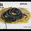 "CUBA - CIRCA 1982: A stamp printed in Cuba shows Saint Croix Racer - Alsophis sanctaecrucis, series ""Reptiles"", circa 1982 — Stock Photo"