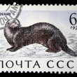USSR - CIRCA 1971: A stamp printed in the USSR shows Sea otter - Enhydra lutris, circa 1971 - Stock Photo