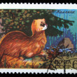 USSR - CIRCA 1975: A stamp printed in USSR shows Musk deer reserve Stolbi, circa 1975 - Stock Photo
