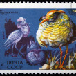 Stock Photo: USSR - CIRCA 1975: The postal stamp printed in the USSR which shows ruff, circa 1975.