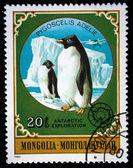 MONGOLIA - CIRCA 1980: stamp printed by Mongolia, shows Emperor Penguins, circa 1980 — Stock Photo