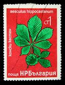 BULGARIA - CIRCA 1970s: A stamp printed in Bulgaria shows Aesculus hippocastanum, circa 1970s — Stock Photo
