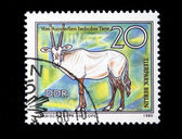DDR - CIRCA 1980: A stamp printed in DDR (East Germany) shows antilope Arabian Oryx, circa 1980 — Stock Photo