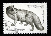 USSR - CIRCA 1980: A stamp printed in USSR shows Arctic fox (Alopex lagopus), series valuable species of fur-bearing animals, circa 1980 — Stock Photo