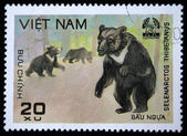 VIETNAM - CIRCA 1980s: A stamp printed by Vietnam shows Asian black bear - Ursus thibetanus, stamp is from the series, circa 1980s — Stock Photo