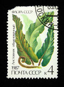 USSR - CIRCA 1987: A stamp printed in the USSR shows Asplenium scolopendrium, circa 1987 — Zdjęcie stockowe