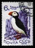 USSR - CIRCA 1976: A stamp printed in the USSR shows bird Atlantic Puffin - Fratercula arctica, circa 1976 — Stock Photo