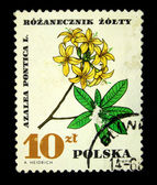POLAND - CIRCA 1968: A stamp printed in Poland shows Rhododendron luteum, circa 1968 — Stock Photo
