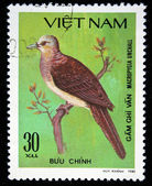 VIETNAM - CIRCA 1980: A stamp printed by Vietnam shows bird Barred Cuckoo-Dove - Macropygia unchall, stamp is from the series, circa 1980 — Stock Photo