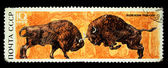 USSR - CIRCA 1969: A stamp printed in the USSR shows European bison - Bison bonasus, circa 1969 — Stock Photo
