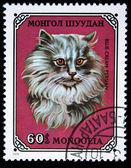 Mongolia - intorno al 1979: un timbro stampato in mongolia illustrato gatto persiano blu-crema, serie, intorno al 1979 — Foto Stock