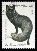 USSR - CIRCA 1980: A stamp printed in the USSR shows black fox - Vulpes, circa 1980 — Stok fotoğraf