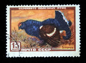 USSR - CIRCA 1960s: A stamp printed in the USSR shows bird Black Grouse or Blackgame - Tetrao tetrix, circa 1960s — Stock Photo
