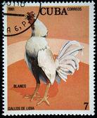 キューバ - 1981 年頃: コックの戦いブランコ キューバ ショーで印刷されたスタンプ、スタンプは 1981 年頃のシリーズから — ストック写真