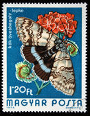 HUNGARY - CIRCA 1974: A stamp printed in Hungary shows butterfly Blue Underwing - Catocala fraxini, circa 1974 — Stock Photo