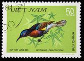 Vietnam - omstreeks 1981: een stempel gedrukt in vietnam toont de vogel blauw-Sweatshirt sunbird - Nectariniidae chalcostetha, stempel is uit de serie, circa 1981 — Stockfoto