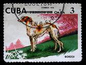 年頃 1976年 - キューバ: キューバで印刷スタンプ 1976年年頃のボルゾイは示しています — ストック写真
