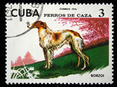 CUBA - CIRCA 1976: A stamp printed in Cuba shows the Dog Borzoi, stamp is from the series, circa 1976 — Stock Photo
